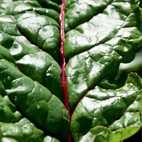 Swiss_chard_medium