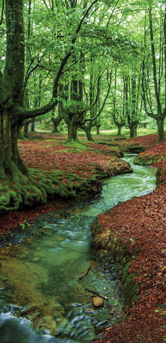 Wall Mural Forest Brook Stream River Trees Decole Poster 3