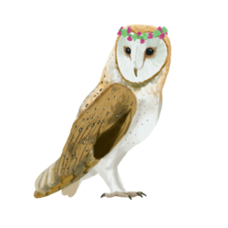 Sticker_owl