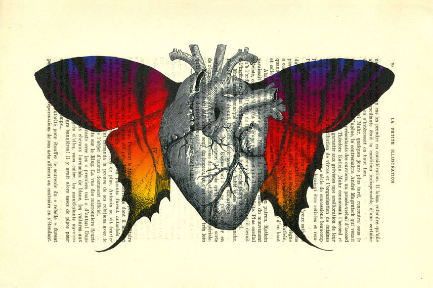 Anatomical Heart With Butterfly Wings Human Heart Dictionary Art