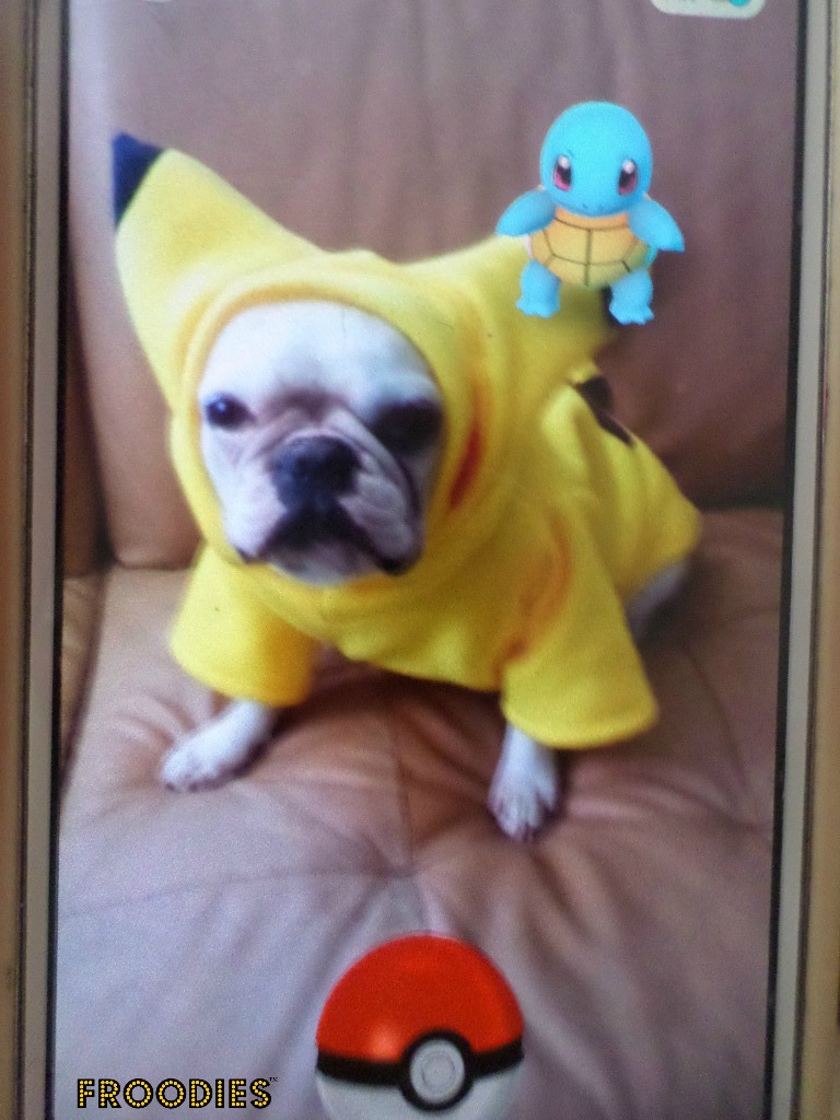 how to catch one dog in pokemon hertgold