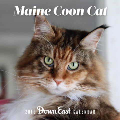2019 Down East Just Maine Coon Cat Wall Calendar sold by Arizona Maine Coon  Cat Rescue
